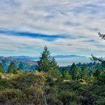 Muir Wood, California